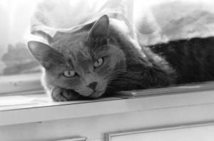 gatto_chiara